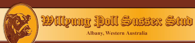 Willyung Poll Sussex Stud - Albany Western Australia